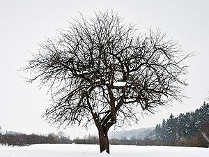 'Karakter is als een boom en reputatie als zijn schaduw. De schaduw is wat we erover denken, maar de boom is de werkelijkheid' - Abraham Lincoln